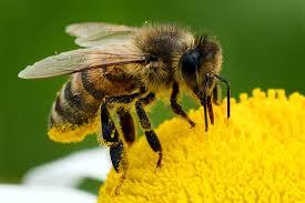 Massives Insektensterben in Deutschland!!!