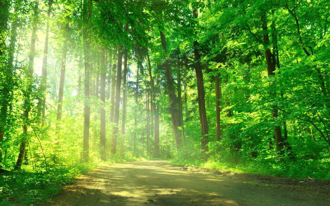 Der Wald als Therapeut?